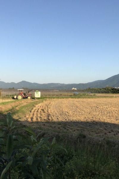 田舎暮らしで幸せなこと|季節の絶景が目の前でいつも楽しめる
